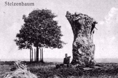 Der Schatz unterm Stelzenbaum