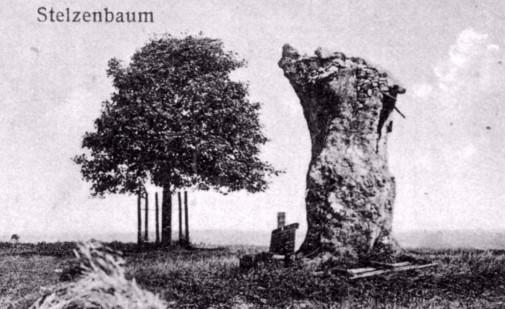Stelzenbaum 1