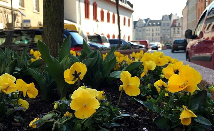 150324 Blumen