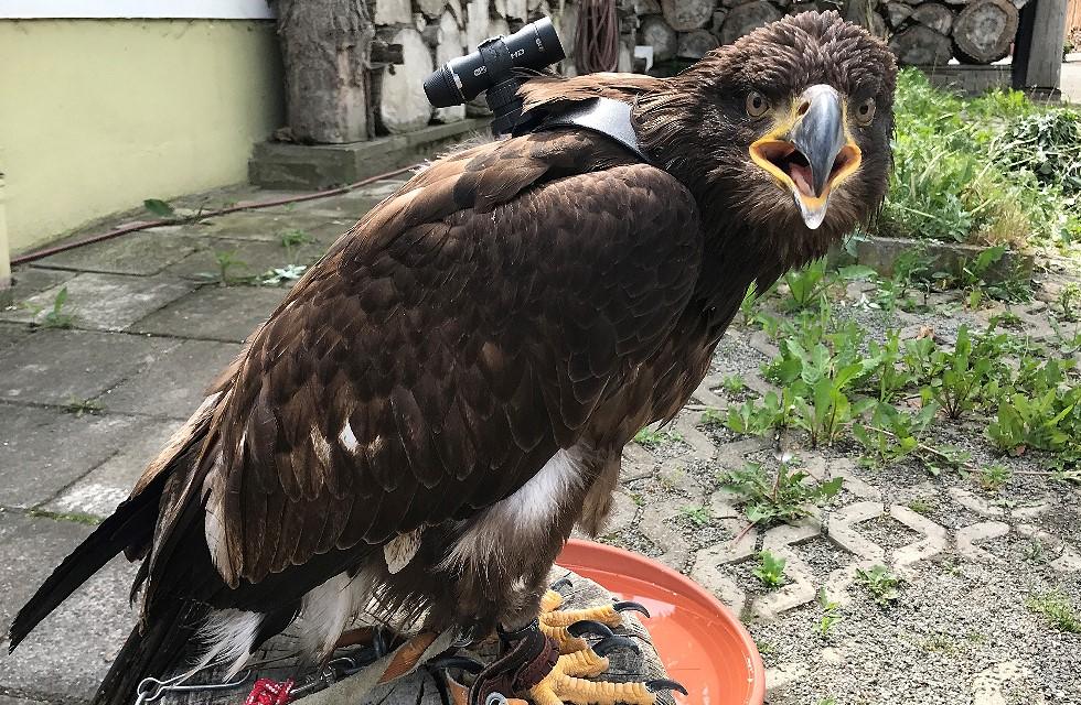 Adler Manitou