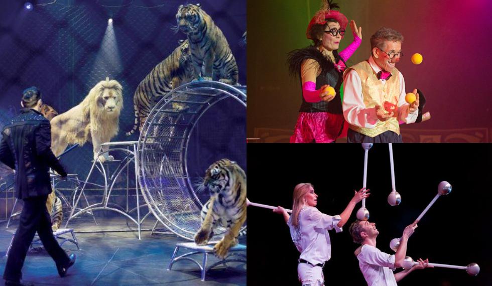 Circus Probst in Plauen