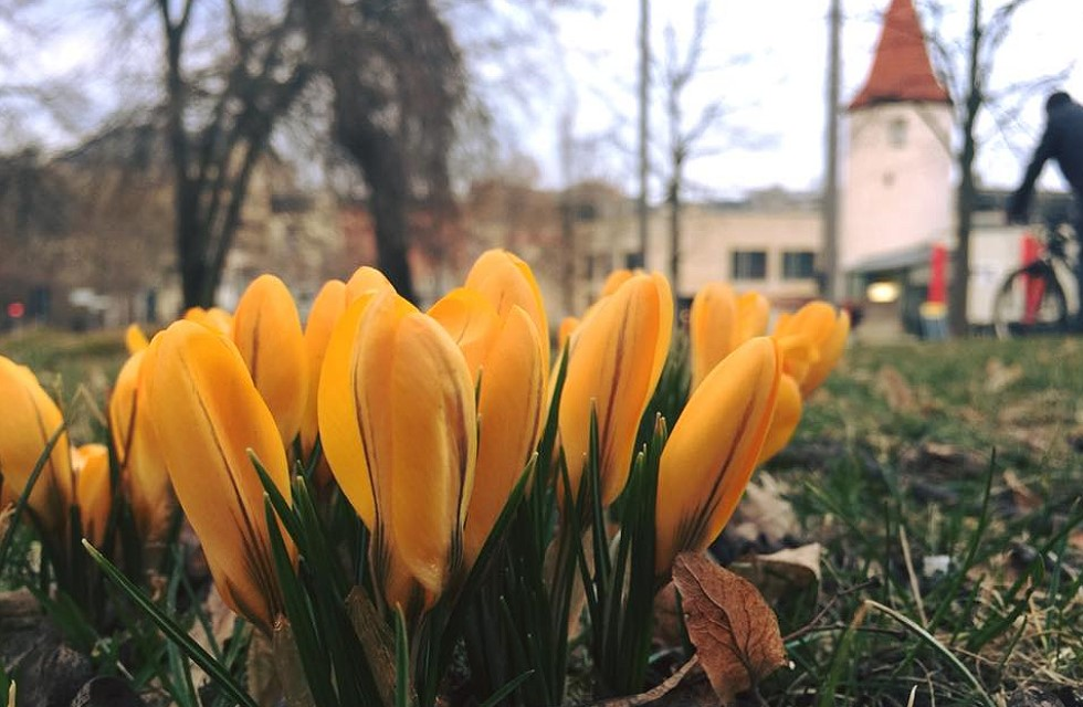 Frühlingserwachen in Plauen