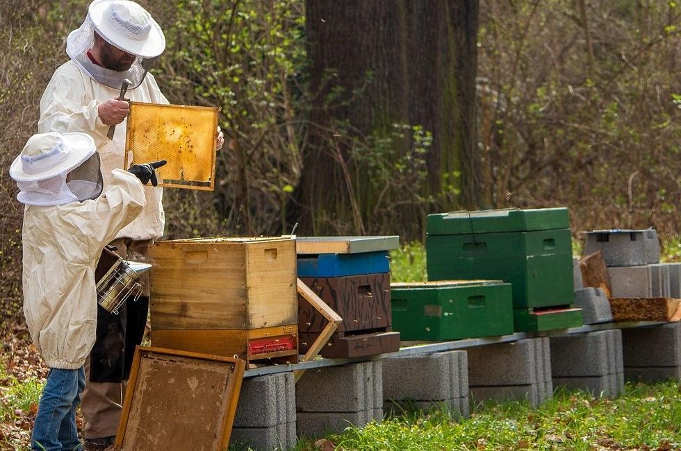 Milben als Gefahr für Imkerbienen