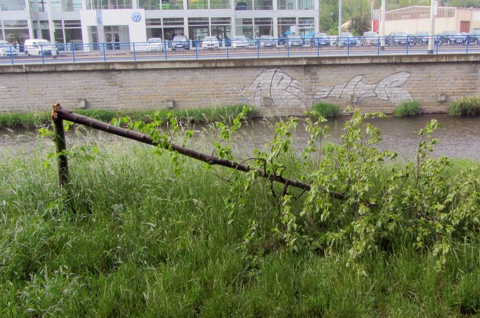 Vandalen brechen erneut in Plauen Bäume an der Elster ab