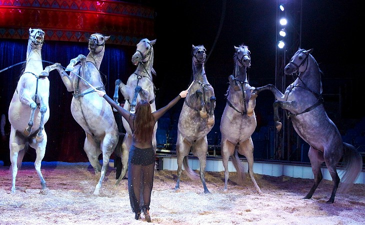 Nationalcircus Carl Busch gastiert in Plauen