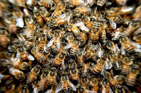 Verdacht auf Bienenseuche im Vogtland