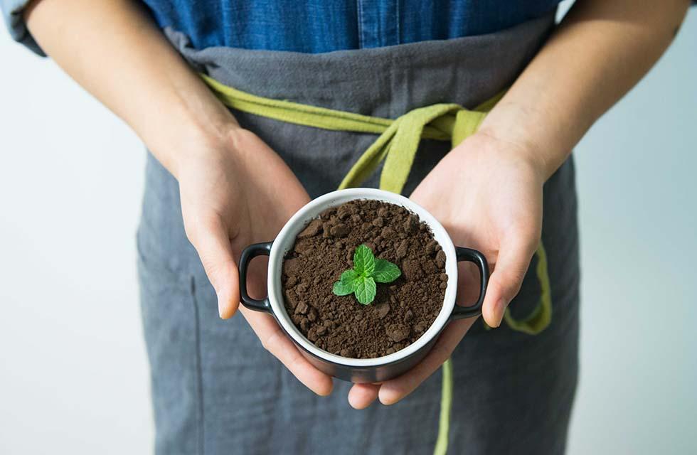 Pflanze-Aufwachsen-Grüne-Woche