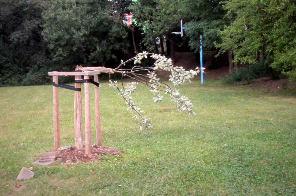 Bäume in Plauen umgeknickt