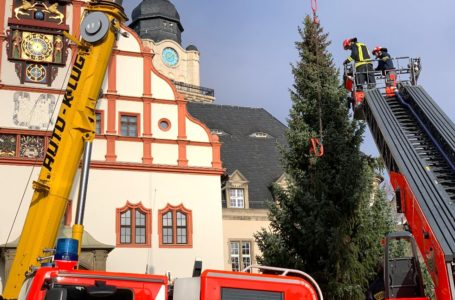 Weihnachtsbäume in Plauen trotz Weihnachtsmarkt-Absage