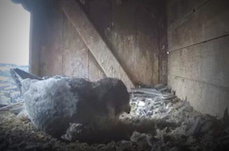envia THERM bietet bedrohten Vogelarten ein Zuhhause