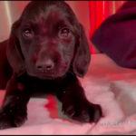 Tierheim Plauen rettet süßen Welpen und sucht Hinweise