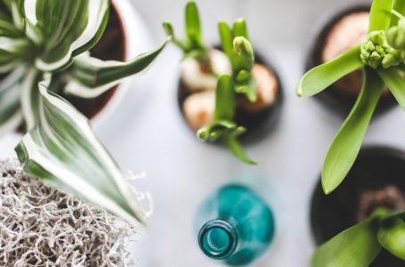 Zimmerpflanzen – Ein Stück Natur ins Wohnzimmer holen